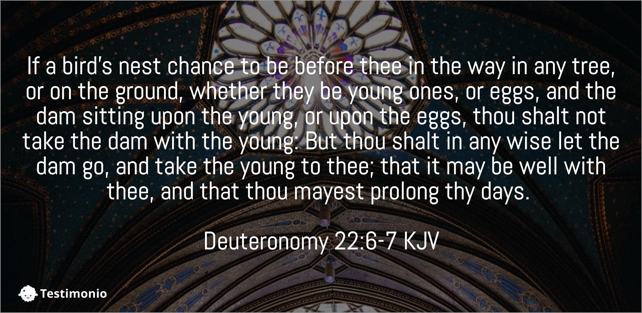 Deuteronomy 22:6-7