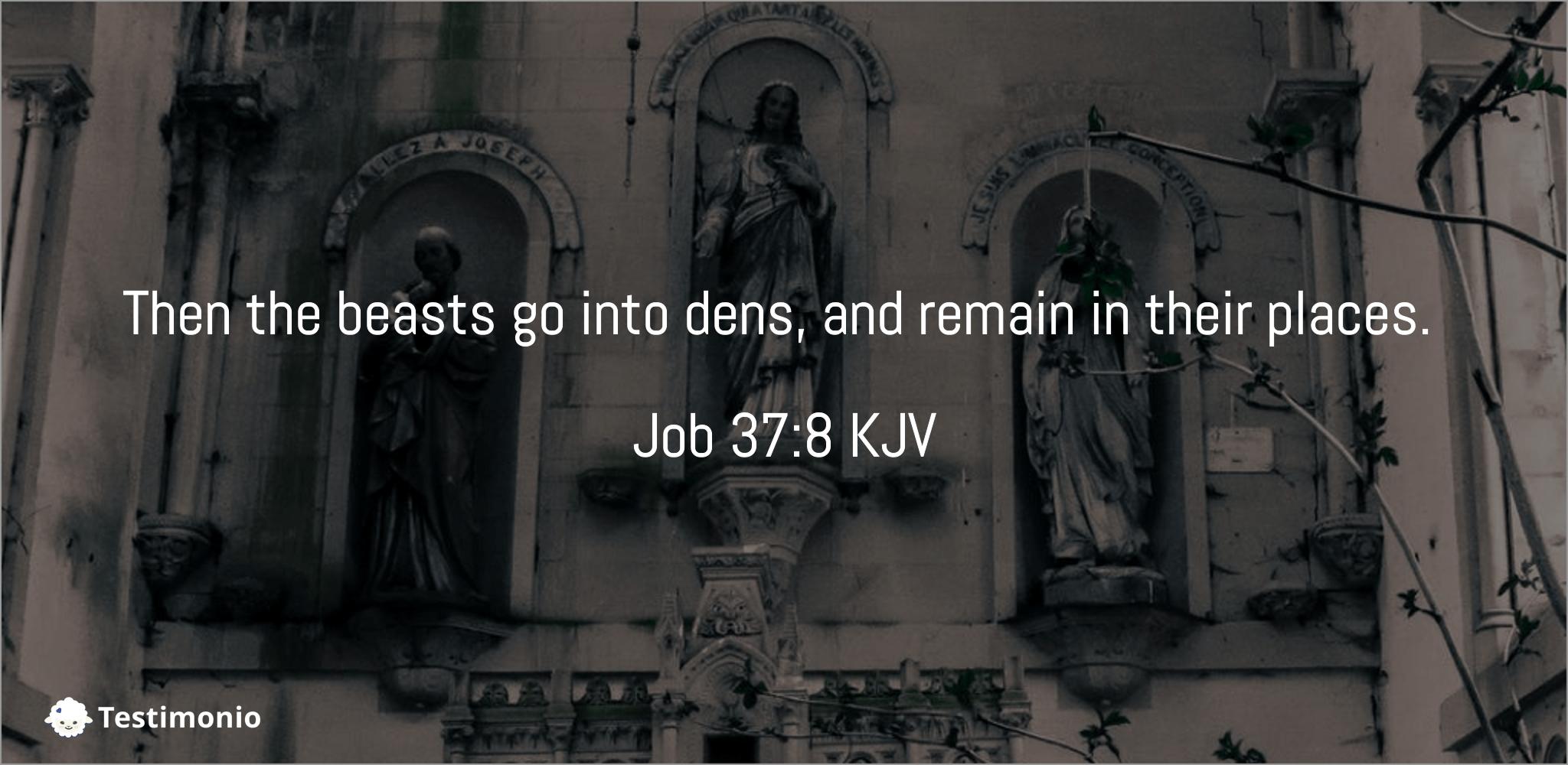 Job 37:8