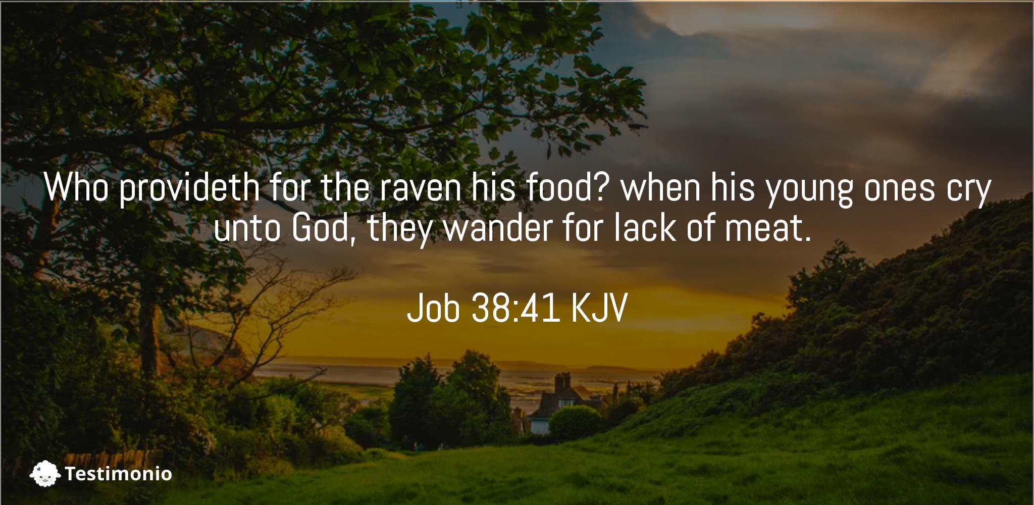 Job 38:41