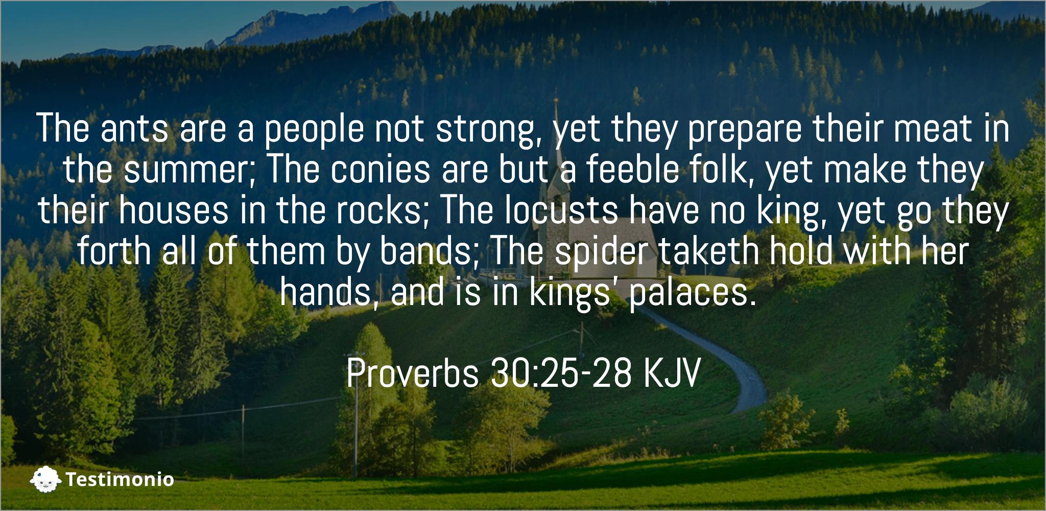Proverbs 30:25-28