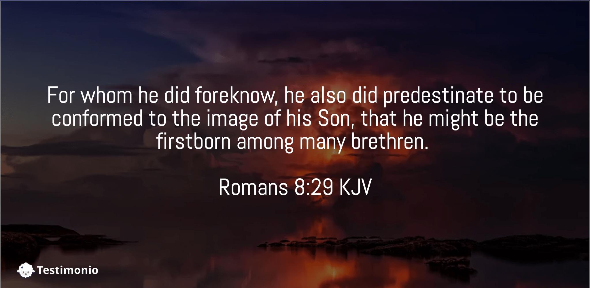Romans 8:29